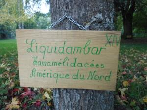 Liquidambar Arboretum Manoir du Pont